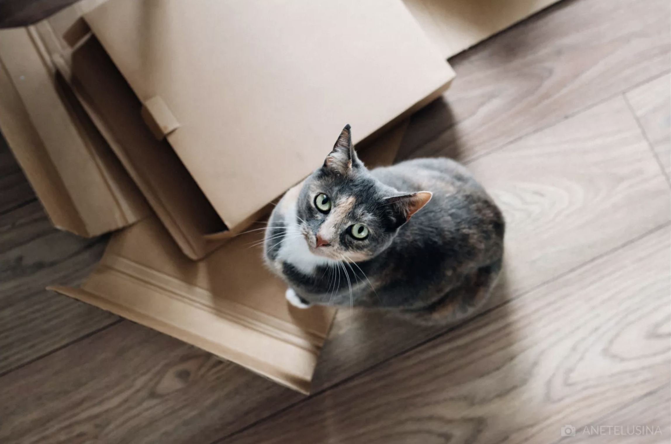Top 10 Tips for Moving with Pets: The St. Louis Edition